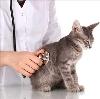 Ветеринарные клиники в Красных Четаях
